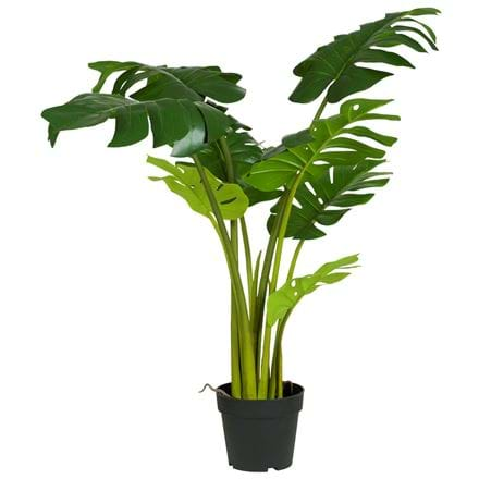 Krukväxt monstera